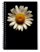 Daisies Are Not Flowers No Text Spiral Notebook
