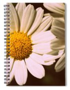 Daisies Spiral Notebook