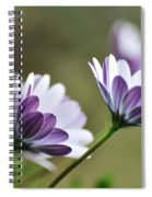 Daisies Seeking The Sunlight Spiral Notebook