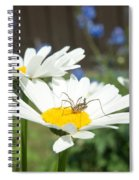 Daisies With Phalangiid Vistitor Spiral Notebook