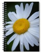 Daisy 14-3 Spiral Notebook