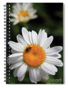 Daisy Bee Nice Spiral Notebook