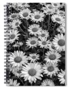 Daisy Cluster Vermont Flowers In Black And White Spiral Notebook