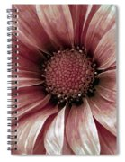 Daisy Daisy Blush Pink Spiral Notebook