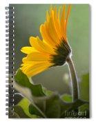 Daisy Derriere Spiral Notebook