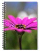 Daisy Dream Spiral Notebook