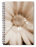 Daisy Dream Raindrops Sepia Spiral Notebook