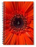 Daisy In Full Bloom Spiral Notebook