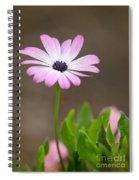 Daisy Mae Spiral Notebook