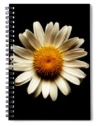 Daisy On Black Square Fractal Spiral Notebook