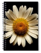 Daisy On Black Square Spiral Notebook