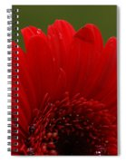 Daisy Red Spiral Notebook