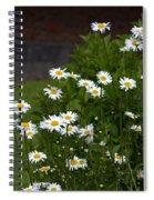 Daisy Splendor Spiral Notebook