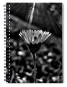 Monochrome Daisy Under Sun Spiral Notebook