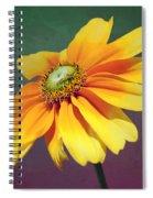 Daisy Visitor Spiral Notebook