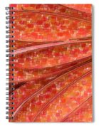 Daisy Watercolor Spiral Notebook