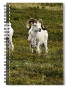 Dall Rams On Alert Spiral Notebook