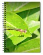 Dam-sel Spiral Notebook