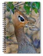 Damara Dik-dik Madoqua Kirkii Feeding Spiral Notebook