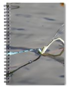 Damselflies Mating II Spiral Notebook