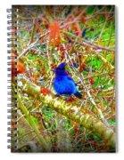 Dance Of Blue Jay Spiral Notebook