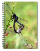 Dance Of The Dragonfliesd Spiral Notebook