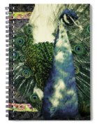 Dance Of The Peacock Spiral Notebook