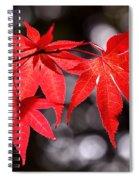 Dancing Japanese Maple Spiral Notebook
