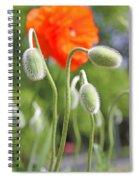 Dancing Orange Poppy Flower Pods Spiral Notebook