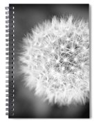Dandelion 2 In Black And White Spiral Notebook