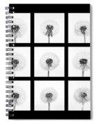 Dandelion 3 Spiral Notebook