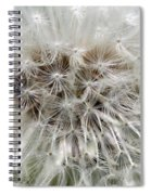 Dandelion Ant Trap Spiral Notebook