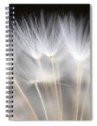 Dandelion Backlit Close Up Spiral Notebook