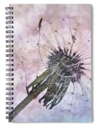 Dandelion Before Pretty Bokeh Spiral Notebook