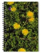 Dandelion Convention Spiral Notebook