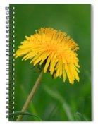 Dandelion Flower Spiral Notebook