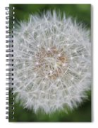 Dandelion Marco Abstract Spiral Notebook