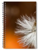Dandelion Seed Head And Fall Color Background Spiral Notebook