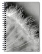 Dandelion Seeds - Black And White Spiral Notebook