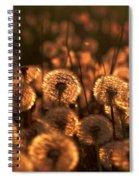 Dandelion Sparkles Spiral Notebook