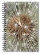 Dandelion Square Spiral Notebook