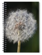 Dandelion With Abstract Grasses Spiral Notebook