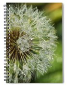 Dandelion With Water Drops Spiral Notebook