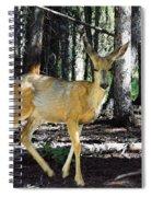Dappled In Light Spiral Notebook