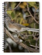 Dark-eyed Junco Spiral Notebook