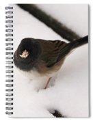 Dark Eyed Junco Spiral Notebook