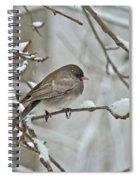 Dark-eyed Junco Or Snowbird - Junco Hyemalis Spiral Notebook