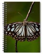 Dark Glassy Tiger Butterfly On Branch Spiral Notebook