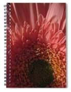 Dark Radiance Spiral Notebook