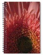 Dark Radiance Spiral Notebook